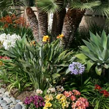 water saving plants in san diego