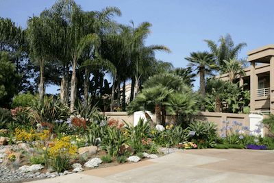 picture of residential landscape design in San Diego