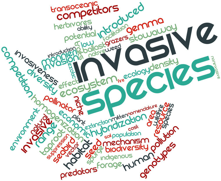 Invasive Plant Species in San Diego