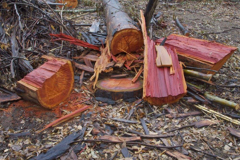 Help Stop the Destruction of Large Trees &  Use of Poisons around Lake Hodges