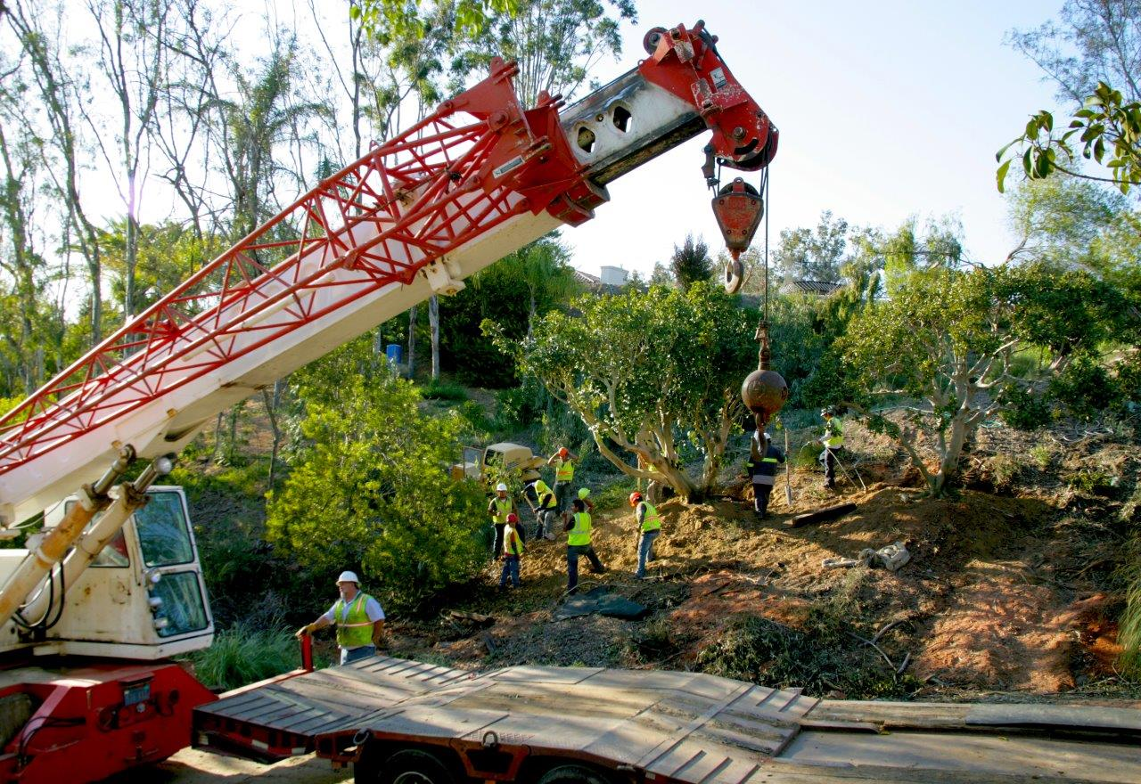 Commercial tree services in san diego