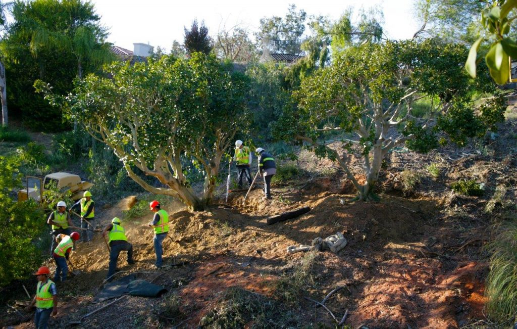 commercial tree service in rancho santa fe san diego